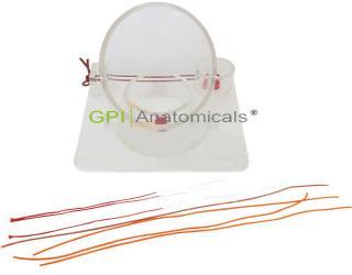 GPI/1007外科打结操作模型