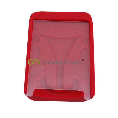 GPI/1018子宫模型Ⅱ型