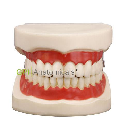 GPI/1053正常大小口腔护理操作模型