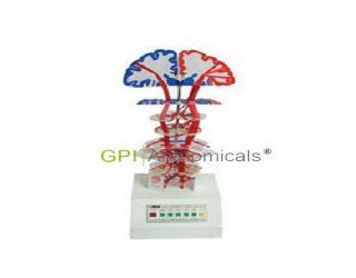 GPI/A16015锥体系(皮质核束)电动模型
