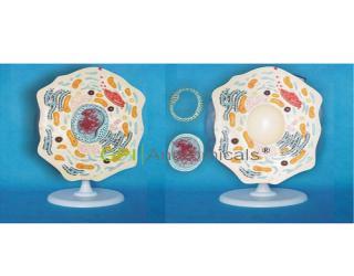 GPI/A40056动物细胞模型