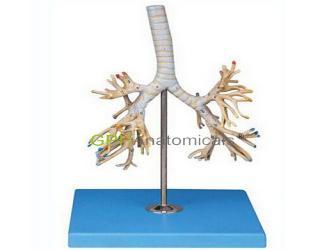 GPI/A13007支气管树模型