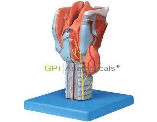 GPI/A13004喉模型