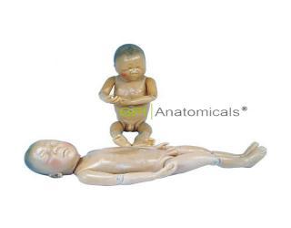 GPI/409A医用新型初生胎儿模型