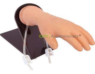 GPI/1033带底坐静脉注射手臂模型