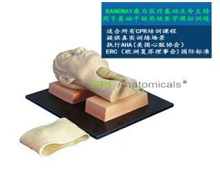 GPI/X1060环甲膜穿刺和切开训练仿真模型