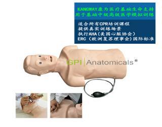 GPI/CPRJ158高级心肺复苏和气管插管半身训练模型——青年版