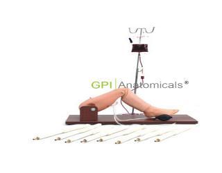 GPI/1001儿童骨穿及股静脉穿刺操作模型